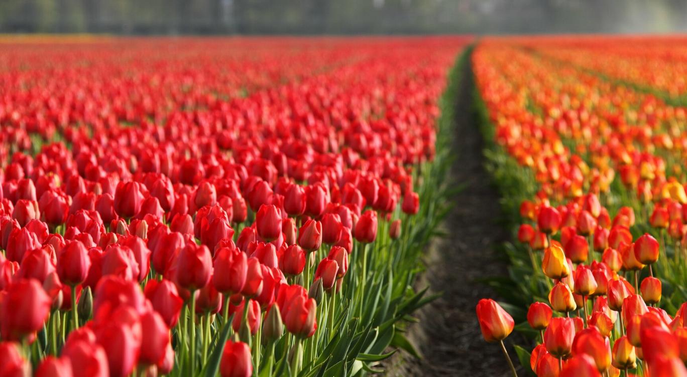 Nederlandse economie is 24,5% Circulair